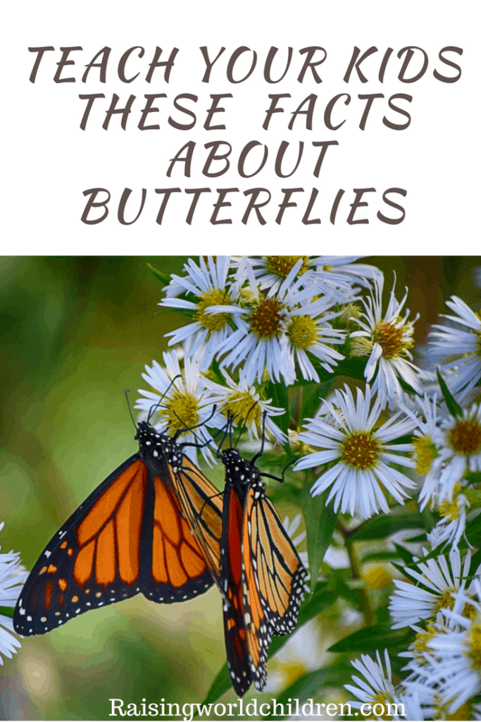 Teach your kids these interesting facts about Butterflies on March 14th . #Nationalbutterflyday