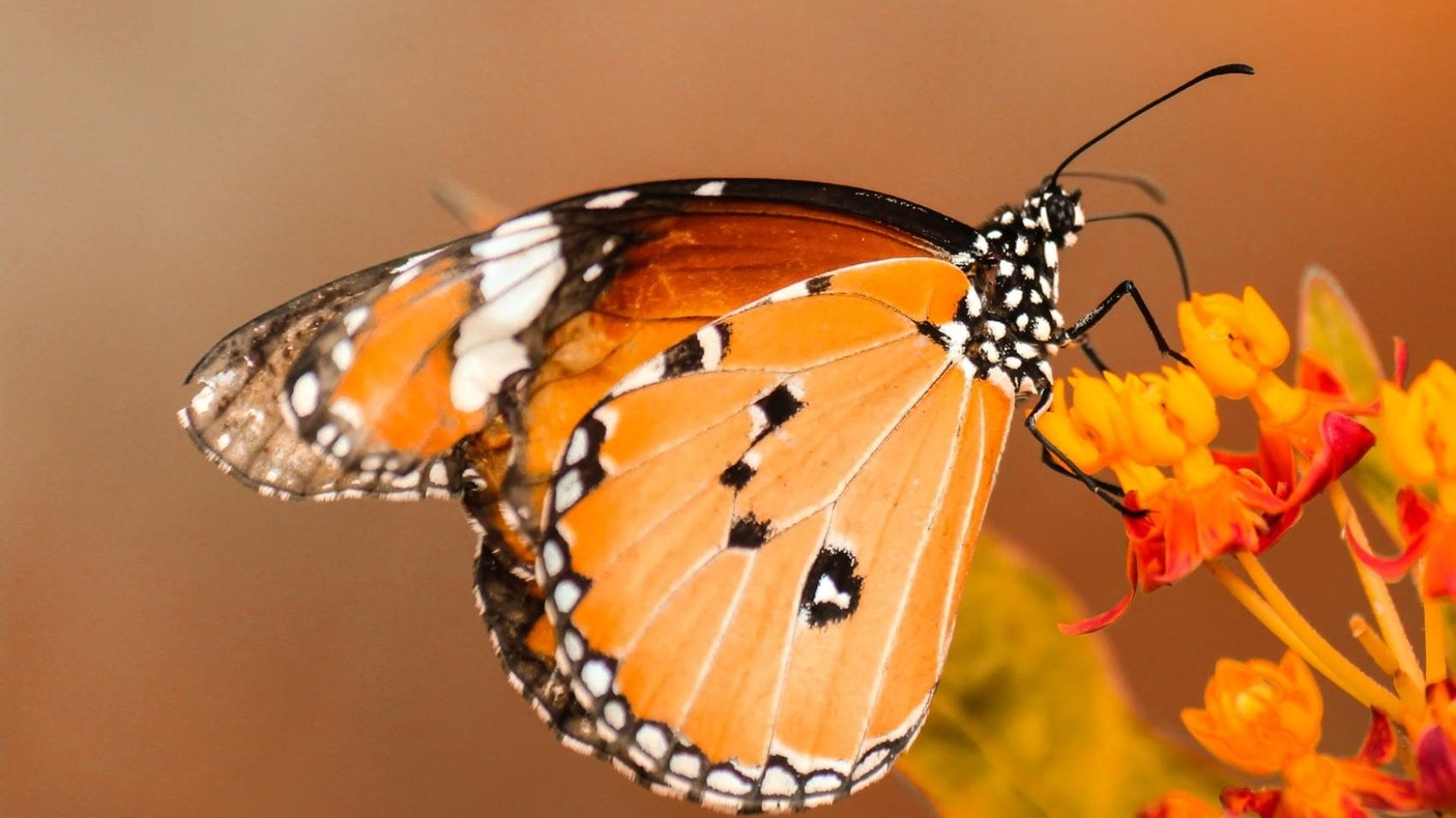 5 Interesting Facts To Teach Kids about Butterflies