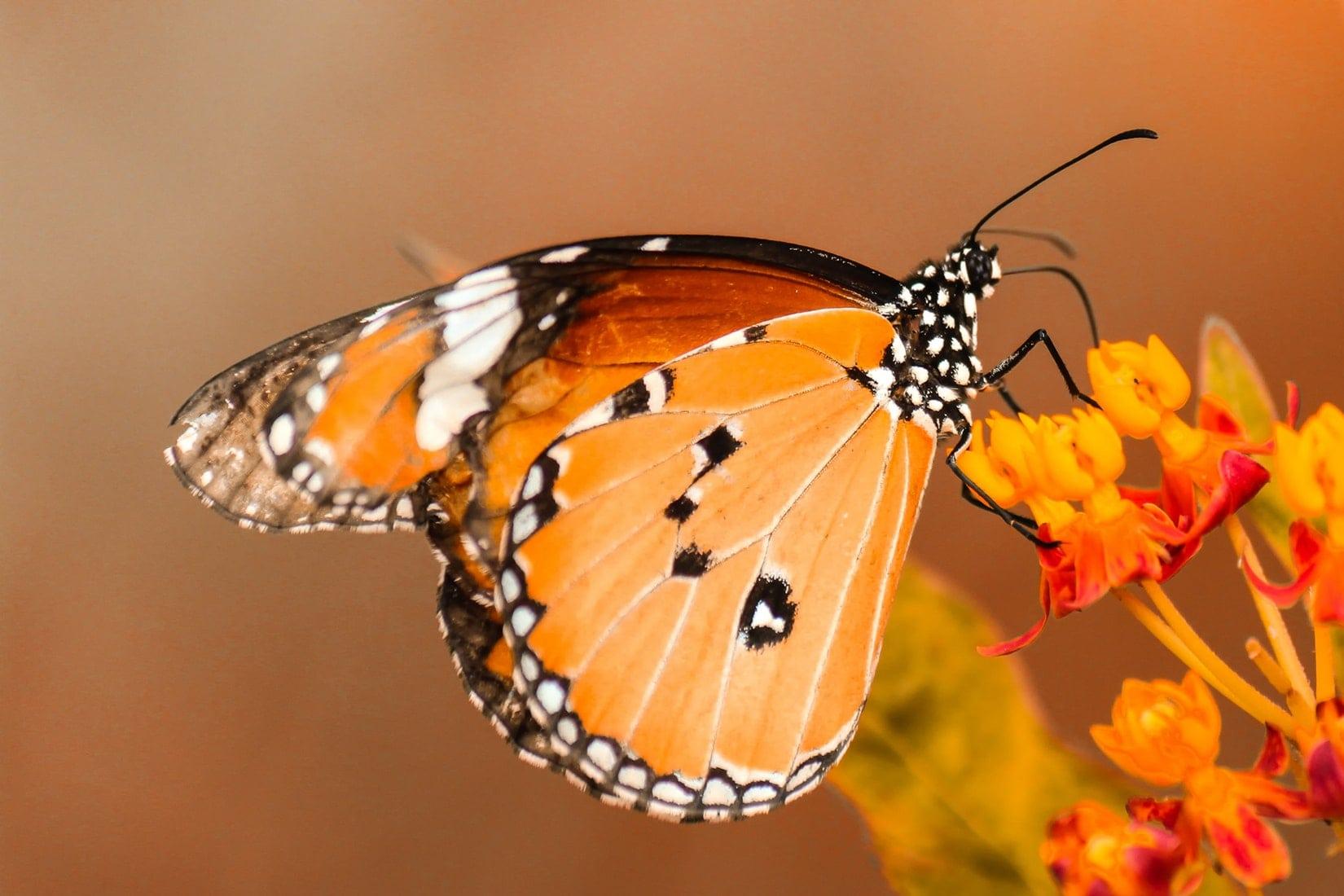5 Interesting Facts To Teach Kids about Butterflies ...