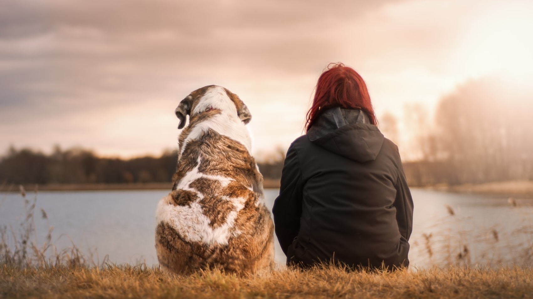 Is Your Family Arguing About Getting a Pet? Read this!
