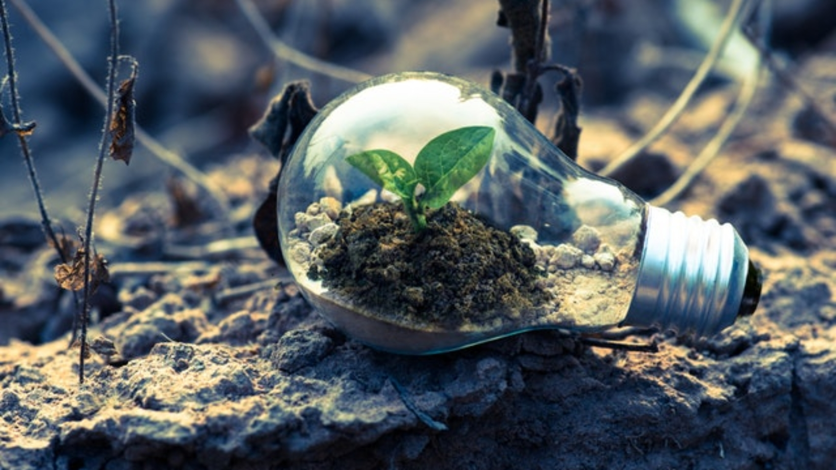 Unique tips for Sustainable Living for a Green Planet