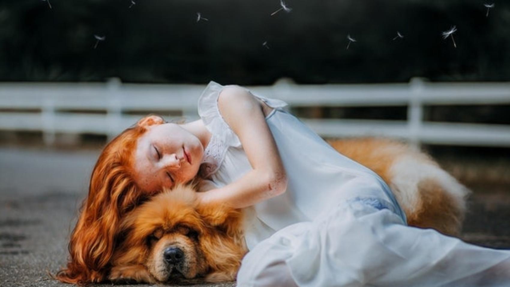 adorable-animal-beautiful-blur-573258